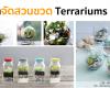 จัดสวนขวด terrarium